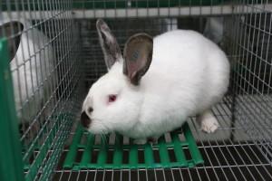 Ферма кроликов