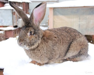 Кролик на снегу