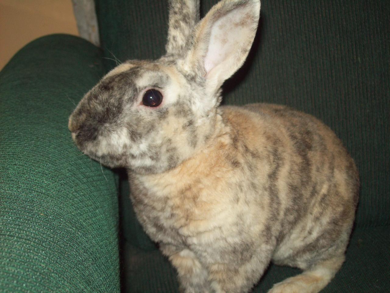 мех кроликов фото