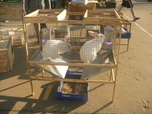 Обустройство клетки для крольчихи