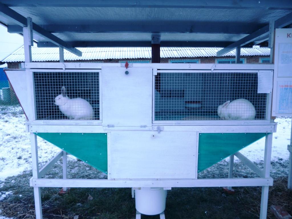 Бизнес выращивание кроликов 72