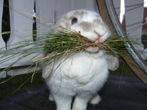 Кормление кроликов зимой и летом