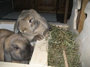 Кролики и сено