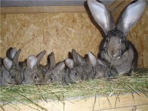 Самка и крольчата
