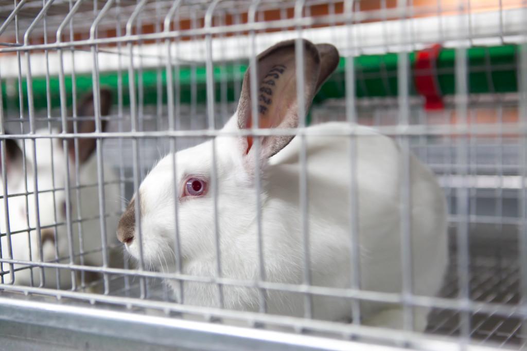 winter к чему снится кролик в клетке поможет