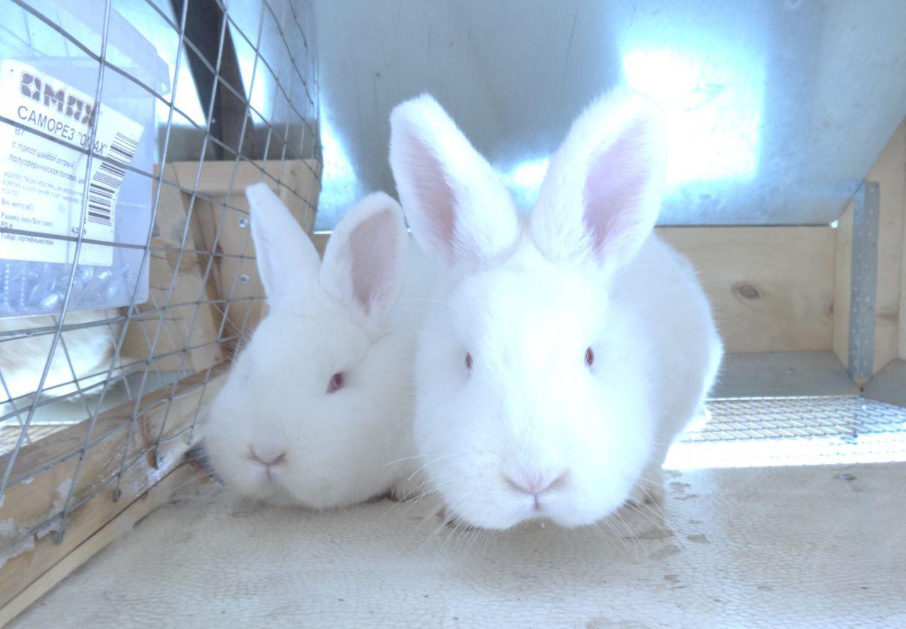 видео с белым кроликом
