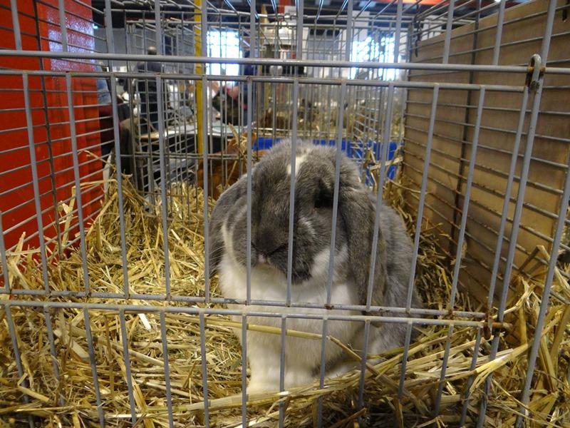 Разведение кроликов породы баран в домашних условиях - Mosstroyservice