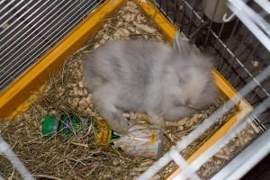 Больной кролик в клетке