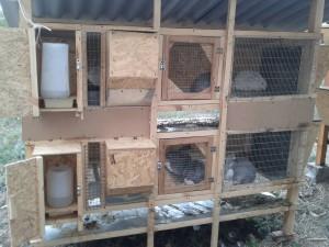 Клетки для кроликов золотухина