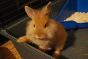 Выбор места для кролика