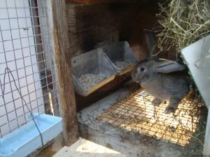 Клетка с кроликов