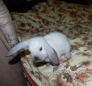 Прогулки кролика