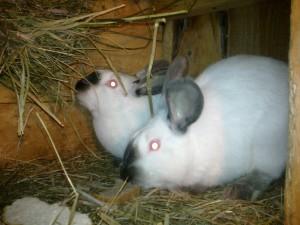 Солома для кроликов