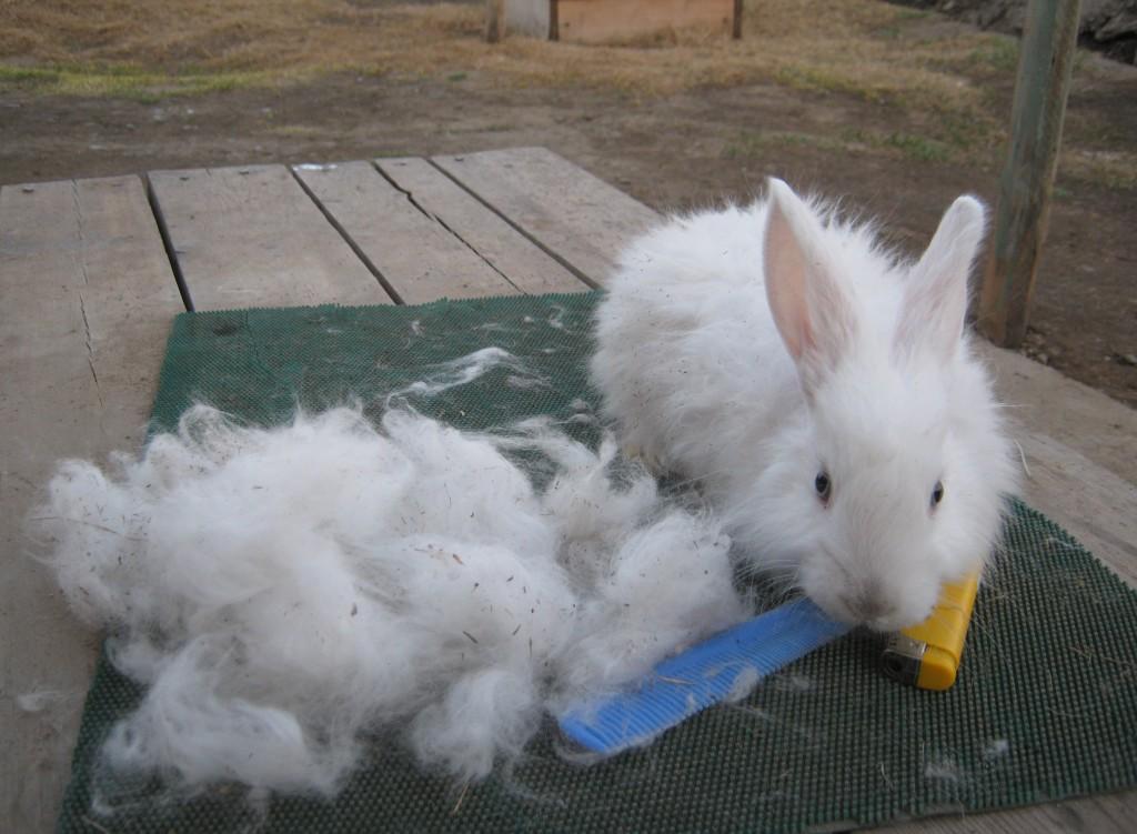Белая пуховая порода