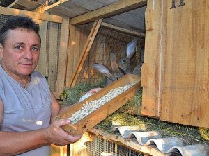 выращивание кроликов в домашних условиях