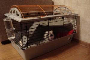 Клетка с кроликом