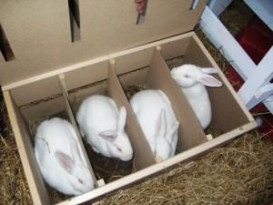 Разведение кроликов на мясо