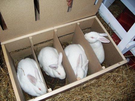 Я хочу поймать белого кролика своими руками 38